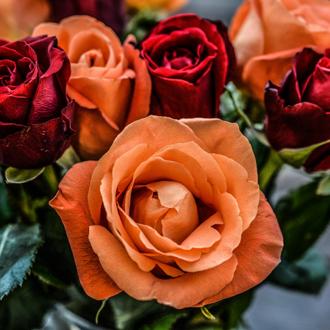 Judy-flowers330px